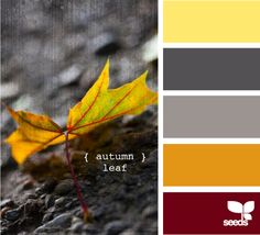Autumn Leaf color palette from Design Seeds.more inspiration for fall designs. Scheme Color, Colour Schemes, Color Combos, Colour Palettes, Paint Schemes, Paint Combinations, Design Seeds, Wall Colors, Paint Colors