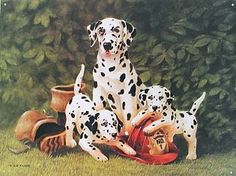 images of dalmatians signs | Dalmatian and Puppies Metal Sign | Dalmatian's and All those Spots