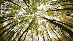 """Are scientists right to argue that plants and trees are """"intelligent"""", and if so, what can we learn from them?"""