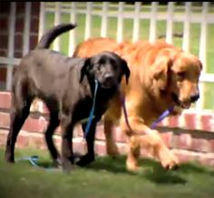 Introduced by chance, two disadvantaged dogs learn to lean on one another for support as they await adoption.