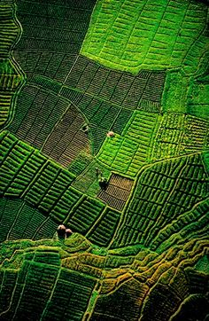 Organic + geometric