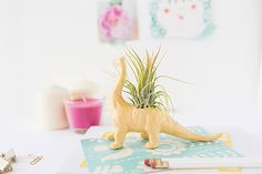 air plant in craft store dino