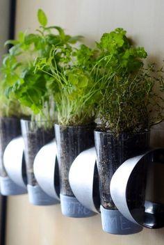 After: Indoor Herb Garden  - HouseBeautiful.com