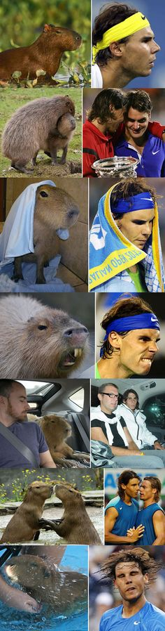 Capybaras Making Rafael Nadal Faces. Mostly I think it's the other way. I love capybaras.