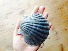 shell I found in the sea in portugal Knitted Hats, Portugal, Shells, Sea, Knitting, Fashion, Conch Shells, Moda, Tricot