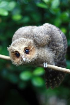 Owlet ~ bokeh