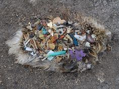 """Photograph by Chris Jordan - """"On Midway Atoll, a remote cluster of islands more than 2000 miles from the nearest continent, the detritus of our mass consumption surfaces in an astonishing place: inside the stomachs of thousands of dead baby albatrosses. The nesting chicks are fed lethal quantities of plastic by their parents, who mistake the floating trash for food as they forage over the vast polluted Pacific Ocean."""