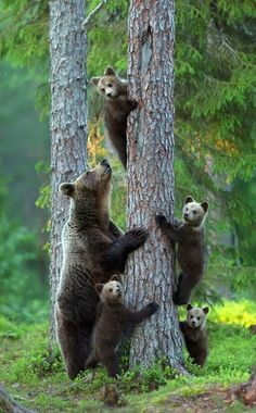 Let's go everyone up the tree!