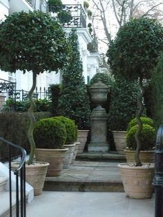 Beautiful topiary collection. Cone shaped in back, shorter rounded boxwoods most likely, and tall topiaries in front. Flanked by a hedge and centered with a stone urn/column. Wonderful!  | Gardens & Landscaping