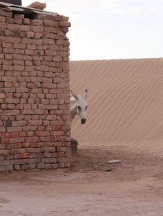 Uzbekistan-Turkmenistan. Donkey In Village.     Courtesy: FO Travel, Paris (France).