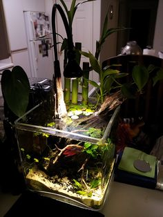 If it wasn't open topped, and therefore yet another water bowl for a variety of animals, and a total cat magnet for many reasons, I'd love to have this. Nano Aquarium, Saltwater Aquarium, Aquarium Fish Tank, Planted Aquarium, Aquarium Ideas, Saltwater Tank, Tropical Freshwater Fish, Freshwater Aquarium, Tropical Fish