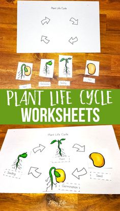 Gardening season is here so learn about plants with these fun plant life cycle worksheets for kids. Get them excited about plants in your own backyard. Learn about the parts of a plant and their life cycle stages grow from seed to adult plant. Kindergarten Science Activities, Homeschool Science Curriculum, Sequencing Activities, Stem Activities, Homeschooling, Preschool, Art Lessons Elementary, Lessons For Kids, Plant Life Cycle Worksheet
