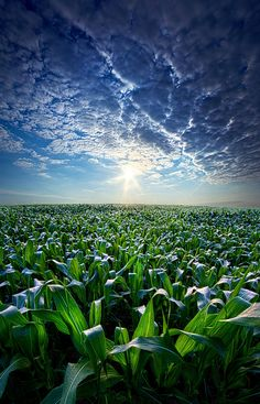 Knee High in July by Phil Koch on 500px