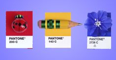 Designer Inka Mathew color codes the trinkets in her life according to her Pantone Matching System swatch book for a personal project she calls Tiny PMS Match.