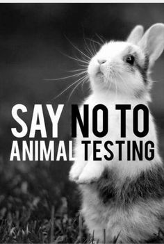 Say NO to animal testing!