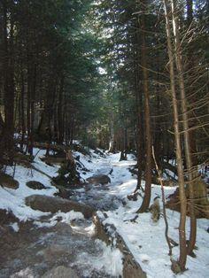 Mit dich bin ich eigentlich froh. Sehr froh. Danke Herr fier die Schoenheit. Cannon Mountain, Winter 2011