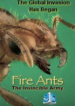 For more than 80 years, Solenopsis Invicta has been on a ceaseless march across the United States,. Fire Ants, Pest Control, Documentary, At Least, Army, United States, 3d, People, Military