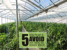Easy Aquaponics DIY System - An Introduction To Fast Methods Of Aquaponics Greenhouse - Larry Vandenberg Lean To Greenhouse, Aquaponics Greenhouse, Aquaponics Plants, Backyard Greenhouse, Greenhouse Plans, Hydroponics System, Hydroponic Gardening, Organic Gardening, Organic Hydroponics