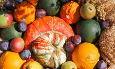 6 Autumn Superfoods that Support Super Health All Season