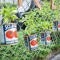 DIY Projects. Fence Basil.