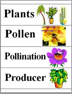 Plants  - Science Word Wall Cards