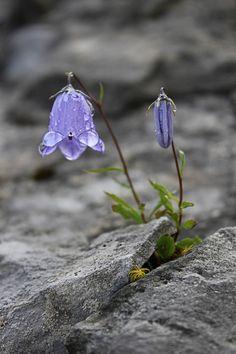 . flower