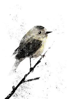 Drawn - heyoscarwilde: Virtual Ornithology ...