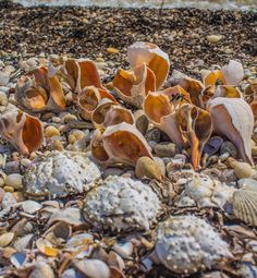 The shells and crabs are up to something as they march to the water, Orient State Park, Orient Point, New York (09/03/2015)