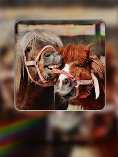 Лошади, Играть, Смешной, Животных, Морские Коньки