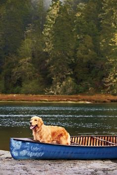 Lakeside Cottage, One Summer, Peace Of Mind, Serenity, Dogs, Animals, Animales, Animaux, Pet Dogs