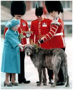 I want an Irish Wolf Hound! If it is good enough for the Queen of England. Giant Dogs, Big Dogs, I Love Dogs, Cute Dogs, Elizabeth Ii, Mans Best Friend, George Vi, Dog Life, Vizsla