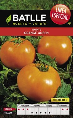 TOMATE ORANGE QUEEN - Sobre BATLLE LINEA ESPECIAL - Dekogarden
