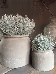 - Garten deko - Brynxz majestic potten – World ♡ Design – world - Decoration Inspiration, Garden Inspiration, Decor Ideas, Estilo Interior, Deco Champetre, Home Remodel Costs, Cheap Houses, Deco Floral, Plant Design