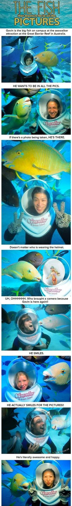 Photobomb-Fisch - der ist echt witzig!