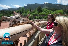 Hand-feed the giraffes at America's only mountain zoo - Cheyenne Mountain Zoo #ColoradoSpringsVacation