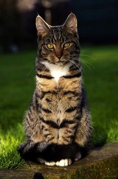 Get some - Most Beautiful Cat Names :-)