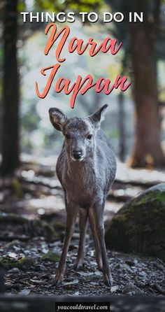 Things to do in Nara (Japan's Oldest Capital) - Beyond its cultural legacy as Japan's first permanent capital, Nara is home to eight Unesco World Heritage Sites. There are so many things to do in Nara, a great city full of traditions, cultures and cute tamed deer awaiting to be fed. See how to enjoy your trip to Nara, Japan. #guide #nara #japan