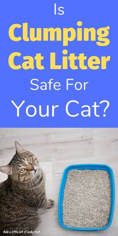 Is clumping litter safe for your cat and does it really stop odour? Find out everything you need to know about clumping cat litter and if it's right for you Best Cat Litter, Cat Life, Cool Cats, Kittens, Cute Kittens, Kitty Cats, Baby Cats, Kitten