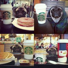 Starbucks pug...pretty cute
