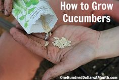 How to Grow Cucumbers {Start to Finish}