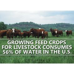 US Farmers irrigate about 56 million acres of land in the US. Some 23 million of those acres are devoted to crops destined for livestock feed.  #cowspiracy #cow #plants #agriculture #alfalfa #hay #beef #environment