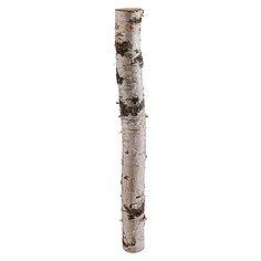 Exclusivholz Birkenstamm (0,8 m, Durchmesser: Ca. 6 - 12 cm, Unbehandelt)
