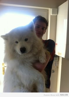 i have no idea what breed this is, part wolf, part bear? All i know is, i want it for xmas!!!!