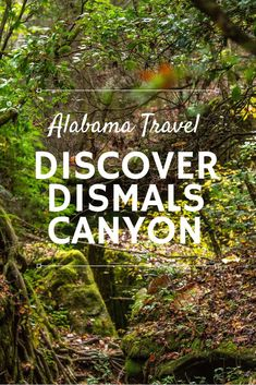 Dismals Canyon is an 85-acre chunk of verdant land in Alabama that has been a National Natural Landmark since 1975. Despite the canyon being a beautiful place to explore, its claim to fame is the glowworms - dubbed dismalites - that live there. Click through to find out more about Dismals Canyon and why you should visit. | Camels & Chocolate #dismalscanyon #alabama #glowworms