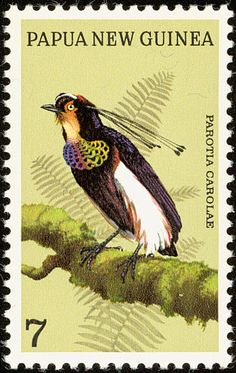 Queen Carola's Parotia stamps - mainly images - gallery format