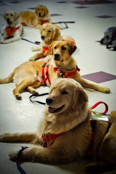 4 Paws for Ability enriches the lives of children with disabilities by training and placing quality, task-trained service dogs. This provides increased independence for the children, and assistance to their families. And 4 Paws also works with veterans from recent conflicts who've lost the use of their limbs or their hearing while in active combat