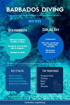 Experience the amazing wonder of scuba diving in Barbados Honeymoon, Barbados Travel, Bermuda Travel, Maui Vacation, Best Scuba Diving, Scuba Diving Gear, Cave Diving, Southern Caribbean, Caribbean Sea