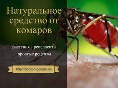 Как сделать натуральное средство от комаров своими руками