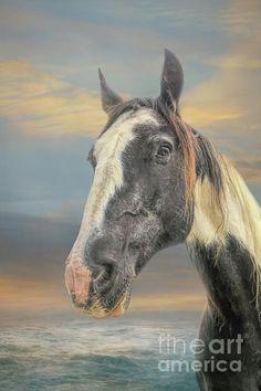 Gypsy Horse, Instagram Images, Horses, Artist, Artwork, Animals, Work Of Art, Animales, Auguste Rodin Artwork