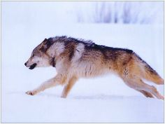 Wolf Pack Memorial Page (Updated 2011)